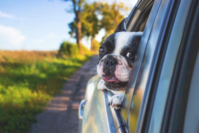 Dog Car Hire