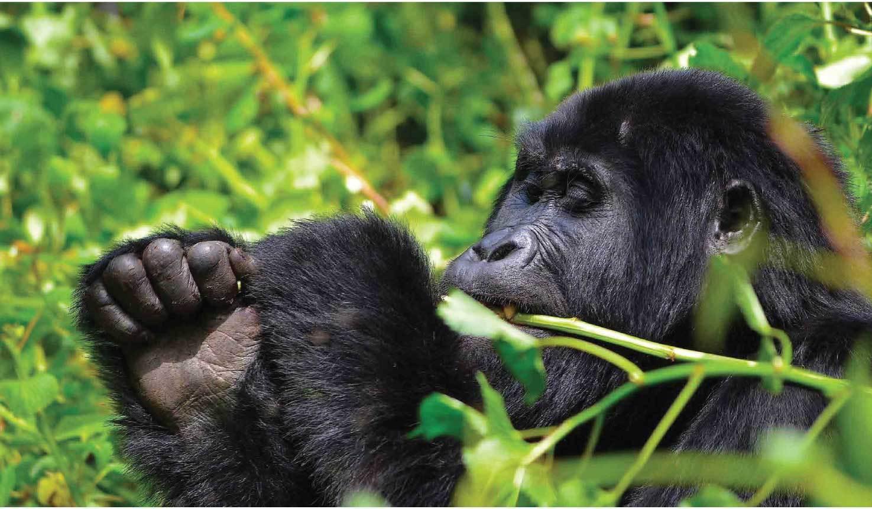 Uganda Rwanda Primates