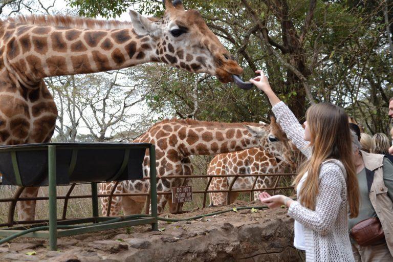 Experience Fun in the Wild on a Kenya Safari