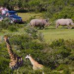 african-safari-garden-route