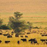 kidepo-national-park-wildlife
