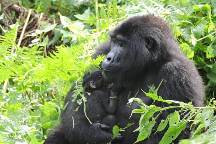 Bwindi Babies in Nshongi